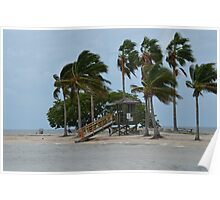 The Beach-Matheson Hammock, South Dade, FL Poster