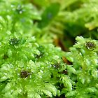 Teeny Tiny Moss by LadyEloise