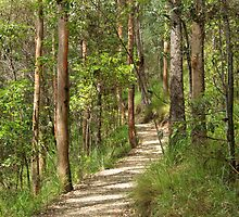 Mt Coot-tha Bush Walking Track by tenzil
