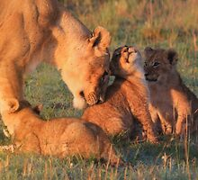 Lioness and Cubs by Jill Fisher