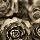Wooden Roses by Trudi Skinn