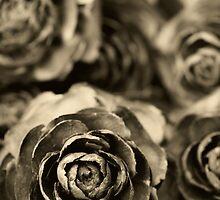 Wooden Roses by Trudi Skinn