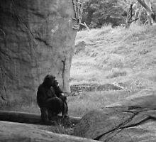 Contemplation by Carolyn  Fletcher