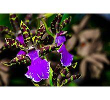 Cymbidium Orchid - First place winner Photographic Print