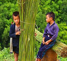 Hmong Boys by Karl Willson