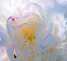 Bugs by MuddyNoSugar