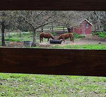 Thru the Fence by HanieBCreations