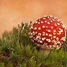 Aminita Muscaria by Glynn May