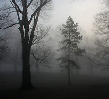 Trees in the Fog by Dan Owens