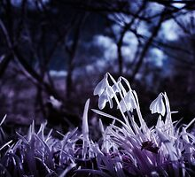 Infrared Snowdrops by Don Alexander Lumsden (Echo7)
