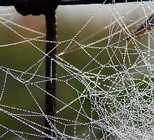 Icy Morning Web by LadyEloise
