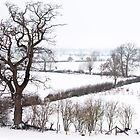 Snow covered fields, Buckinghamshire by David Isaacson