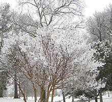 Feb. 19 2012 Snowstorm 6 by dge357