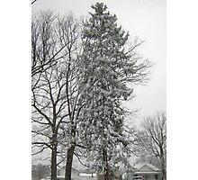 Feb. 19 2012 Snowstorm 21 Photographic Print