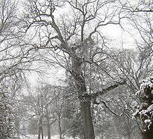 Feb. 19 2012 Snowstorm 29 by dge357