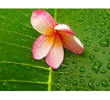 Water on a Flower Photographic Print
