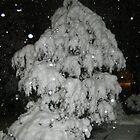 Feb. 19 2012 Snowstorm 51 by dge357