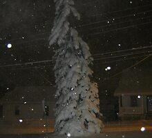 Feb. 19 2012 Snowstorm 63 by dge357