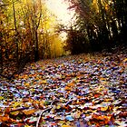 Autumn Leaf Path (HDR) by Vicki Field