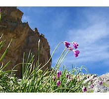 Nature Photography: Pink Flowers from the French Alps Photographic Print