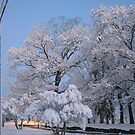 Feb. 19 2012 Snowstorm 75 by dge357