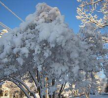 Feb. 19 2012 Snowstorm 114 by dge357