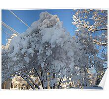 Feb. 19 2012 Snowstorm 114 Poster