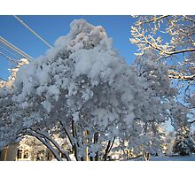 Feb. 19 2012 Snowstorm 114 Photographic Print