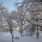 Feb. 19 2012 Snowstorm 134 by dge357