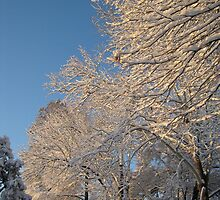Feb. 19 2012 Snowstorm 138 by dge357