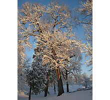 Feb. 19 2012 Snowstorm 144 Photographic Print