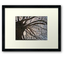 Feb. 19 2012 Snowstorm 147 Framed Print