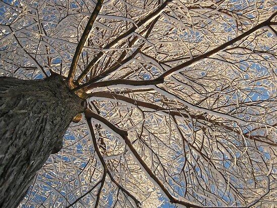 Feb. 19 2012 Snowstorm 152 by dge357