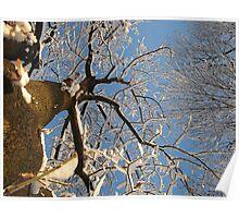 Feb. 19 2012 Snowstorm 159 Poster