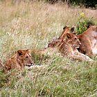 Hunting in Packs by bhavini
