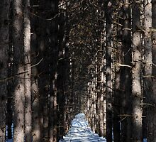 Deep Woods on a Sunny Day by goddarb