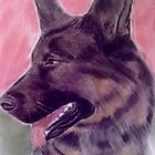 German Shepherd by DianeL