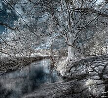Shadows & Streams by Martin Finlayson