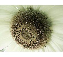 Subtle Sunflower I Photographic Print