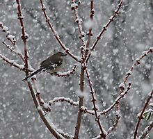 Bird and Snow~ by virginian