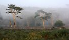 Foggy Morning, Lake Nakuru, Kenya by Carole-Anne