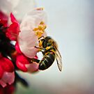 The Bee And The Cherry Tree by Spiiral