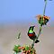 Sunbird on Wild Dagga Plant 2 by HippyDi