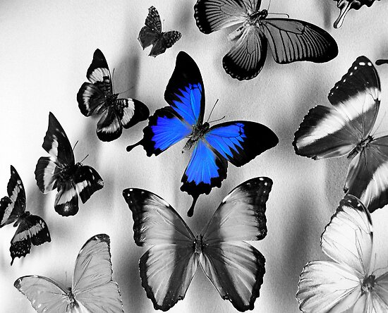 One Blue Butterfly by rosaliemcm