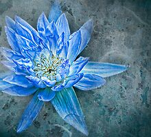 The Blue Dahlia - II - Interpretations by Marilyn Cornwell