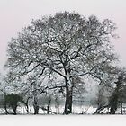 Winter Tree at Wraysbury by wraysburyade