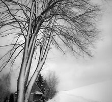 winter tree by Dorit