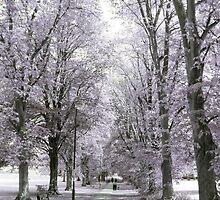 Chippenham Park in Infrared by missmoneypenny
