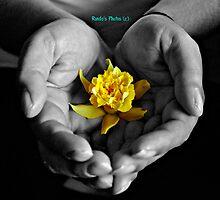 Yellow by Ronda Basteyns