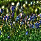 SpringFlowers_5872 by sasakistudio